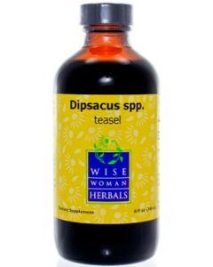 Dipsacus spp. (teasel) 8 oz Wise Woman Herbals