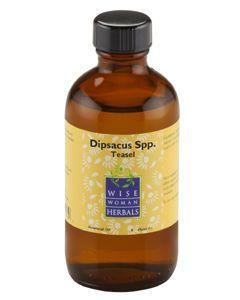 Dipsacus spp (teasel) 4 oz Wise Woman Herbals