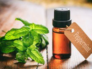 Peppermint Oil Uses and Benefits, for Gut Health, Headaches & More